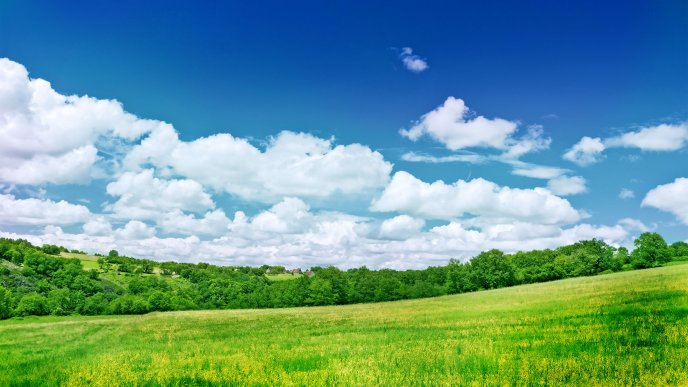 Green field and wonderful blue sky - Summer time