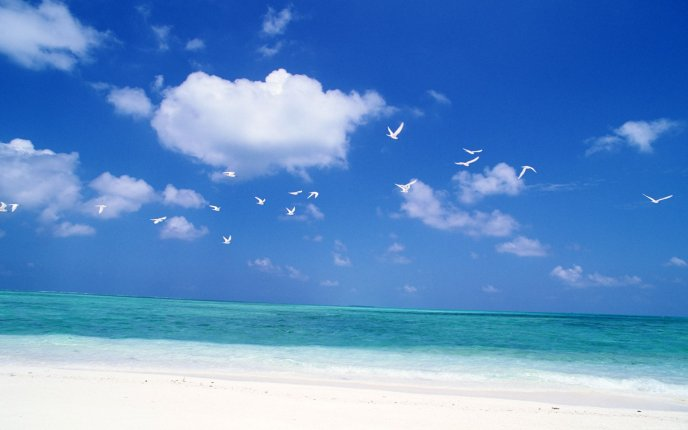 Wonderful blue water and white birds on the sky