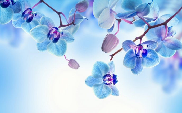 Download Wallpaper Romantic flower - Blue and white Orchid - HD wallpaper