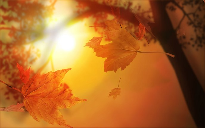 Macro Autumn leaves flying down to ground - HD wallpaper