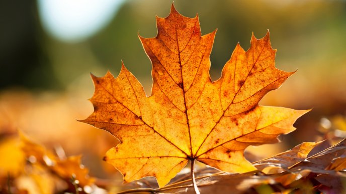 Wonderful Autumn leaf - Macro HD wallpaper