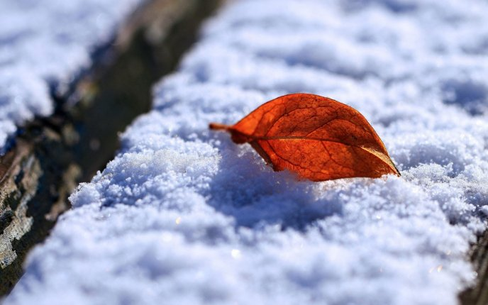Macro beautiful rusty Autumn leaf on the white snow