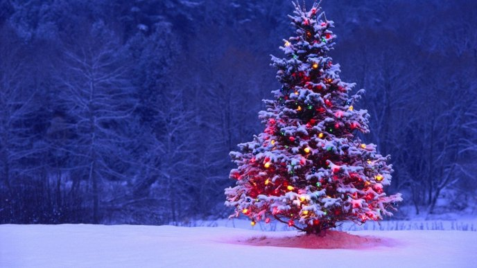 Christmas tree full with lights and snow - HD wallpaper