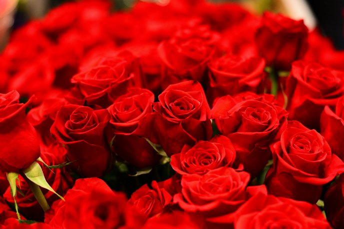 Big bouquet of red roses - Happy Valentines Day my love