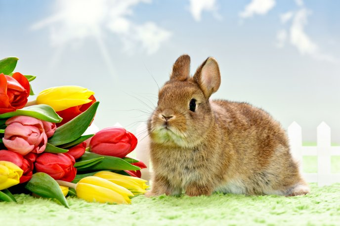 Fluffy rabbit and wonderful bouquet of tulips -Spring season