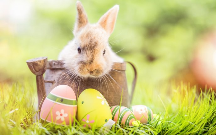 Browny fluffy rabbit and colorful Easter eggs -Happy Holiday