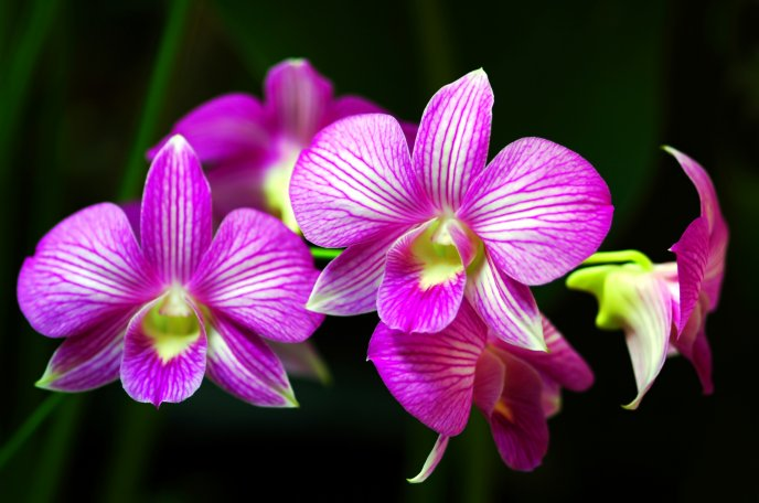 Beautiful purple Orchid flower in the garden
