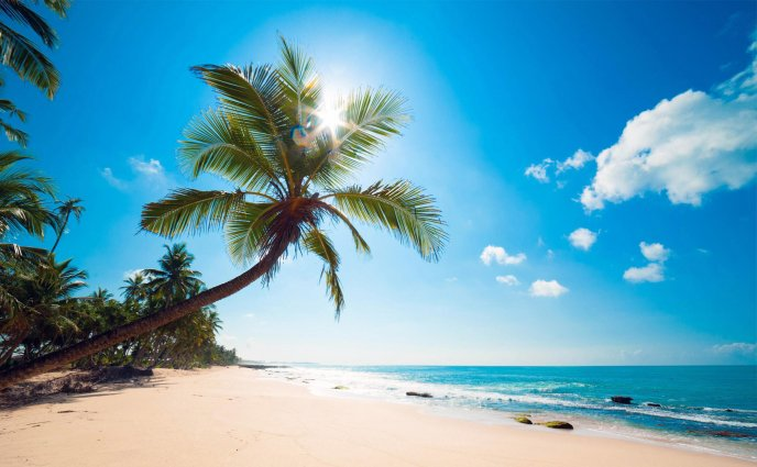 Beautiful summer sunny day on an island - Palm and sand