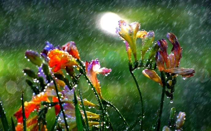 Macro water drops on the flowers - Hot summer rain