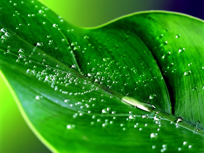 Nature is wonderful - Macro water drops on a green leaf