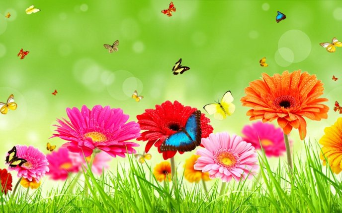 Beautiful butterflies on colorful spring flowers - Spring