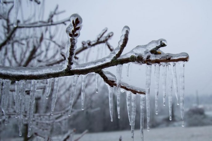 All nature is frozen - Ice on the branches - Winter season