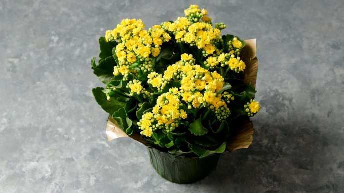 Simple gift this Spring season - Wonderful yellow flower