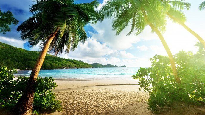 Tropical beach and palm - Summer holiday