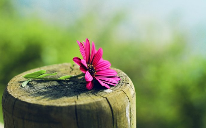 Wonderful pink flower on a wooden log - Blurry background