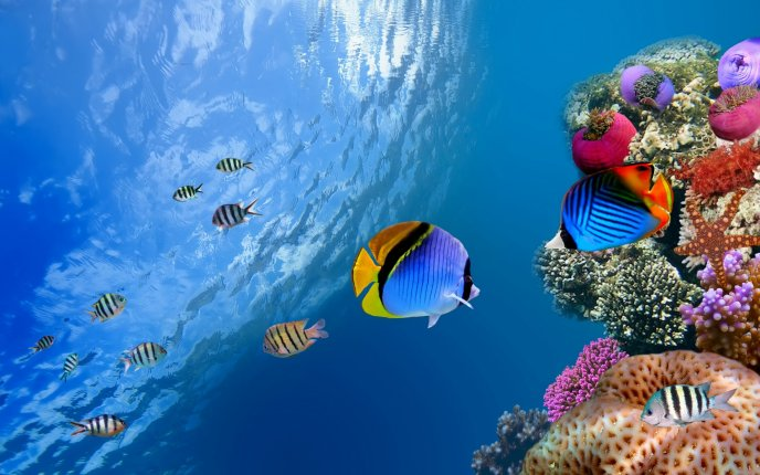 Colorful fishes in the fresh ocean water - HD wallpaper