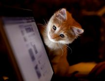 Cat navigating on the internet