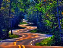 Winding road through the forest