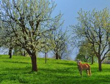 Beautiful horse in a meadow of trees in bloom