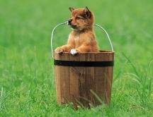 Little puppy in a wooden bucket on the field