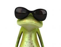 Trick frog wearing sun glasses