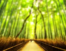 Blurry bamboo forest HD wallpaper