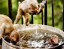 Zoo - monkeys doing bath