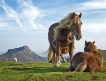 Two horses in nature - on a beautiful green meadow