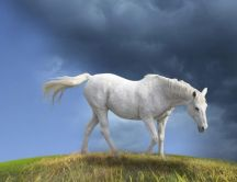Beautiful white horse on the field - painted wallpapers