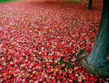 Autumn red blanket HD wallpaper