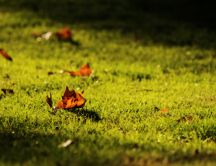 Some copper-colored leaves on a green field