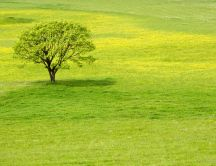 A tree on a big green field Hd wallpaper