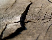 Macro - crack in the wood HD wallpaper