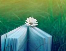 A flower between the pages of a book on the grass