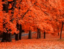Amber forest - a sign that autumn came HD wallpaper