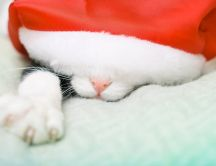 Drowsy cat sleeps under Santa's hat HD wallpaper