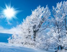 Sunshine over snow covered trees HD wallpaper