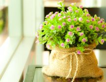 Little purple flowers in a canvas bag HD wallpaper