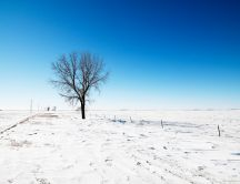 A single tree on a white field of snow