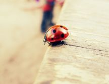 Ladybug on the curb - ready to fly