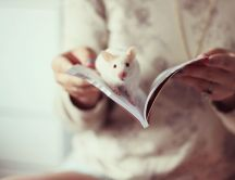 One white mouse in a book