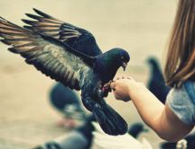 A friendly pigeon sit in a girl's hand