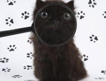 Cat face seen through the magnifying glass