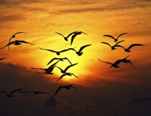 Birds fly in orange light of sunset