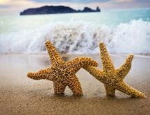 Starfish saves its girlfriend from drowning - Love wallpaper