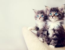 Two little cats - the most beautiful eyes