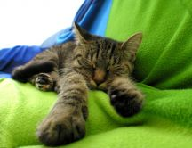 Little cat is sleeping on a green blanket