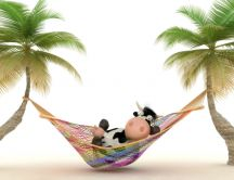One cow in a hammock - funny wallpaper