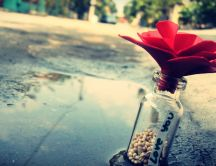 Lovely red rose in a bottle - hand made