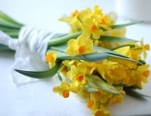 Yellow daffodil bouquet - spring flowers